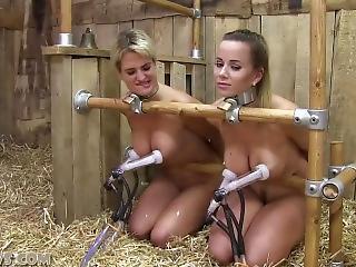 best of Market Femdom slave
