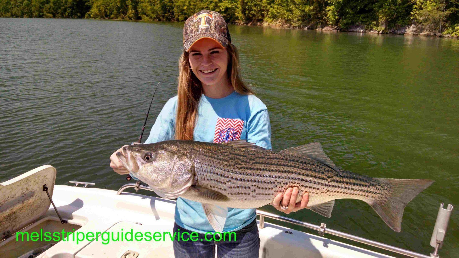 Athena reccomend Bush red fish striped bass