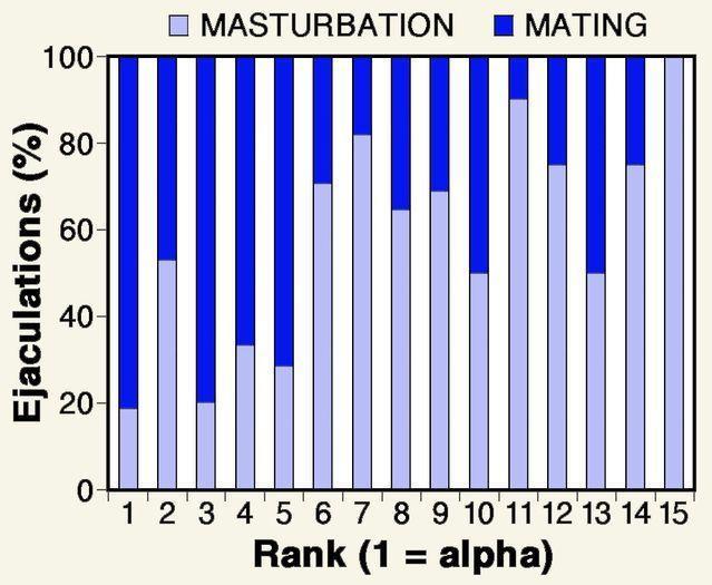 Adhd post masturbation