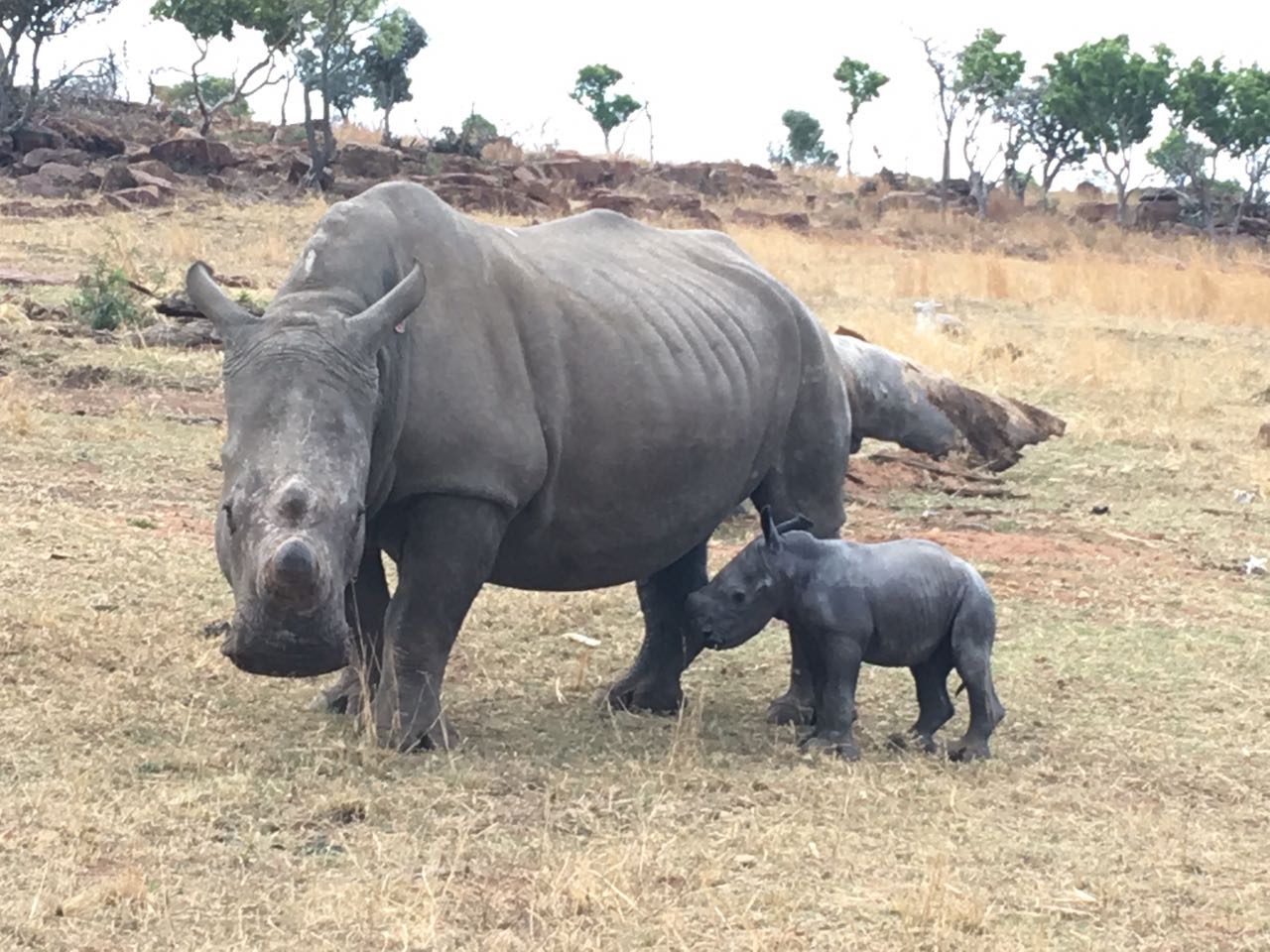 best of Rhino Black interracial
