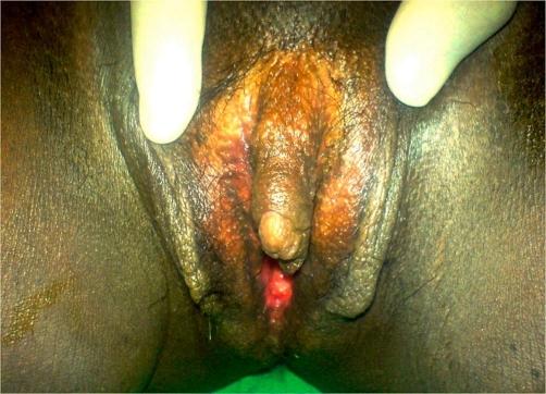 Big busty porn gallery
